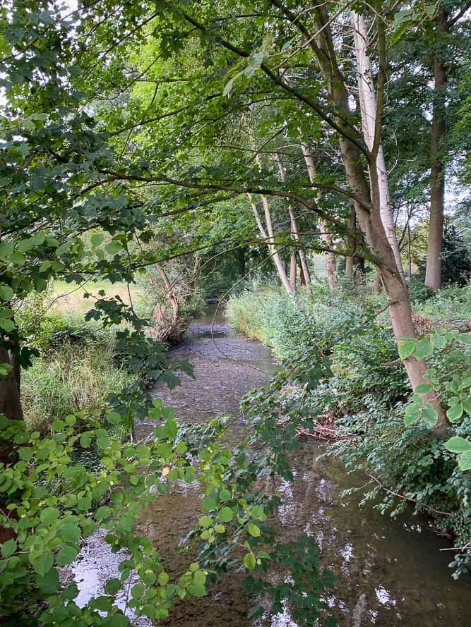 Mijn tips voor Zuid-Limburg, Tips voor Zuid-Limburg, wat te doen in Zuid-Limburg, bezoek de prachtige oude bossen van de regio voor mooie wandelingen. Tips voor uitstapjes met kinderen, wandelroutes Zuid-Limburg,