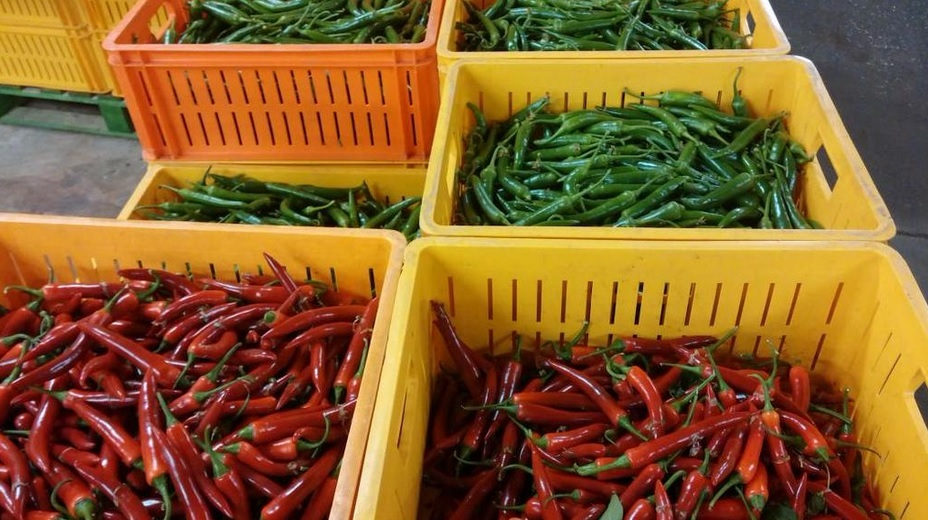 Westland Peppers
